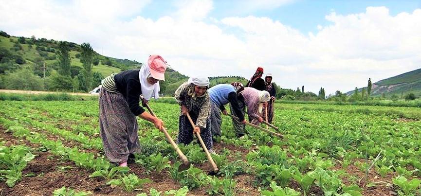 İBB Şile'de çiftçilere destek oldu!